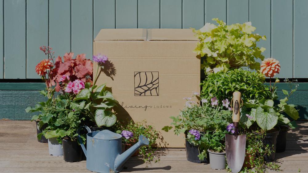 Living Windows Ltd. – Outdoor Plants and Gardens